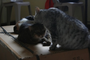 My cute cat grooming her brother
