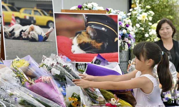 Tama the cat funeral