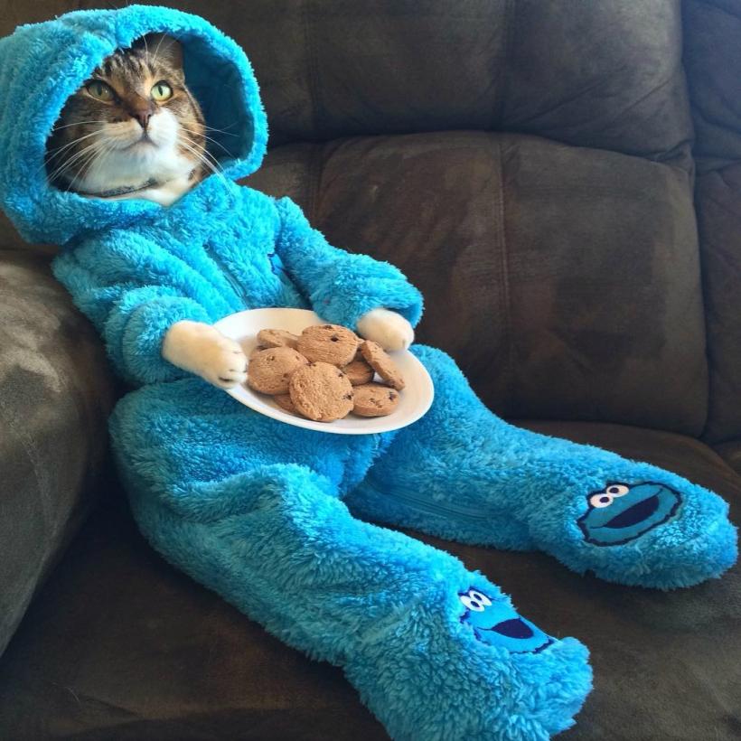 Cat pajama